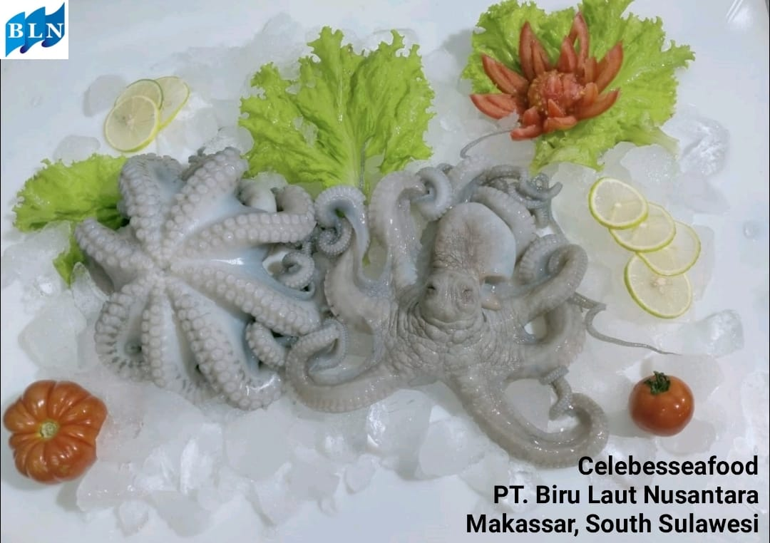 OCTOPUS WHOLE CLEANED FLOWER TYPE