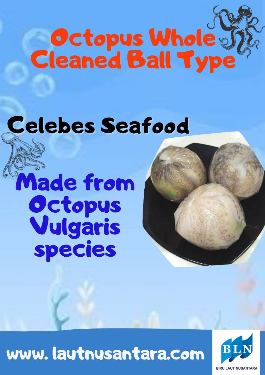 Octopus Whole Cleaned Ball Type is made from Octopus vulgaris species