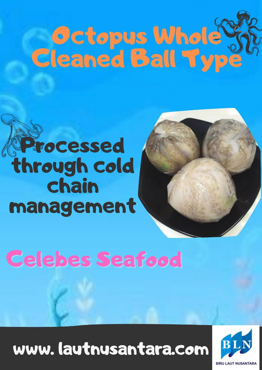 Octopus Whole Cleaned Ball Type processed through cold chain management